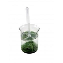5667 Apparecchio per la dimostrazione della respirazione delle piante acquatiche