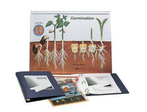 HS2850 Modello sulla germinazione