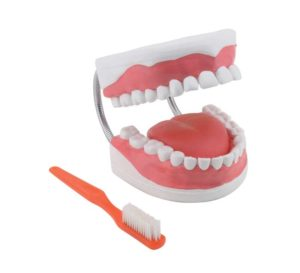 GD0312 Modello per l'igiene dentale