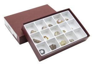 HS3110 Raccolta di 15 fossili